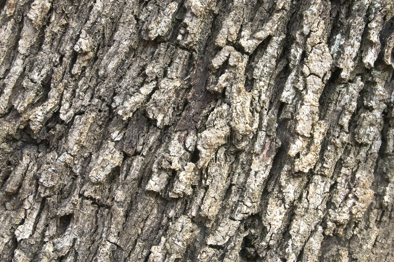 Download Bark texture 07 stock image. Image of nature, cortex, aged - 453005