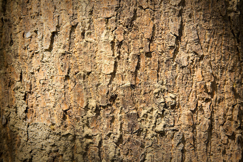 Download Bark texture stock image. Image of bark, texture, design - 13688977