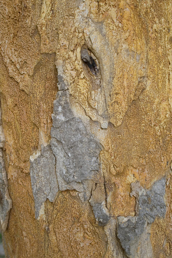 Free Bark Texture Stock Photo - 14165750