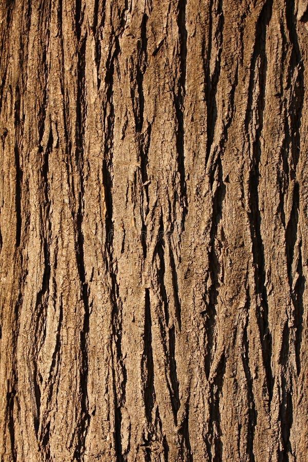 Free Bark Texture Royalty Free Stock Image - 14506536