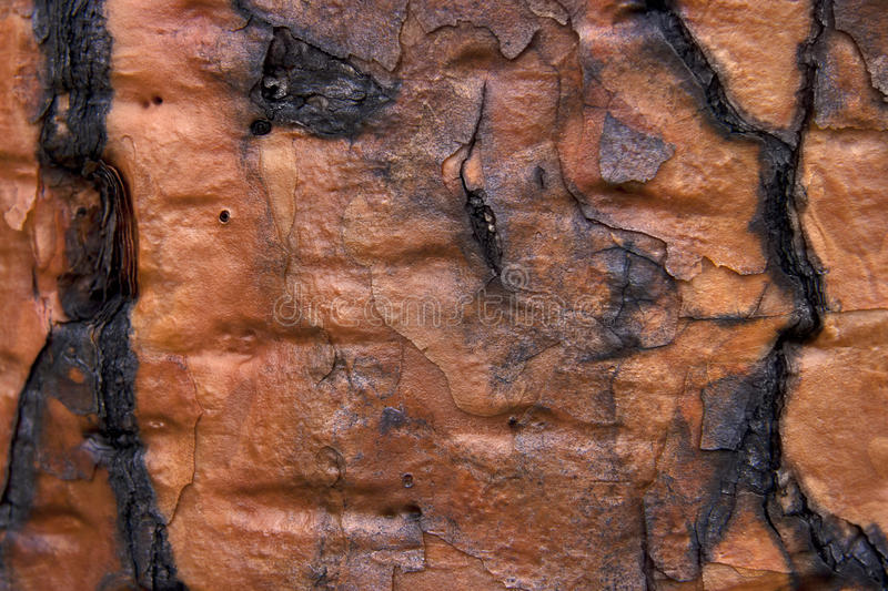 Download Bark texture. stock image. Image of material, tree, plant - 19246615