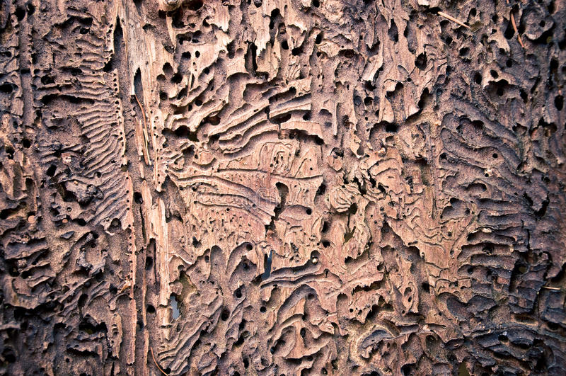 Download Bark texture stock photo. Image of detail, forest, background - 21950862