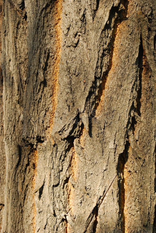 Download Bark texture stock image. Image of material, wooden, bark - 25644273