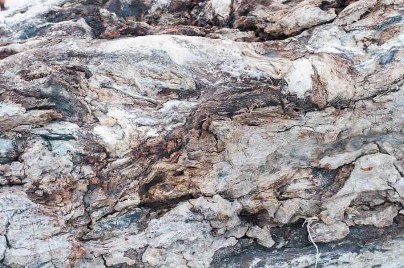 Download Bark texture stock photo. Image of bark, expired, slice - 26930084