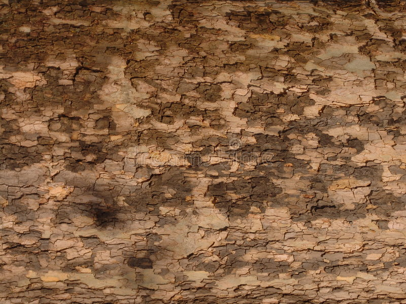 Download Bark Texture stock illustration. Image of rough, covering - 70184