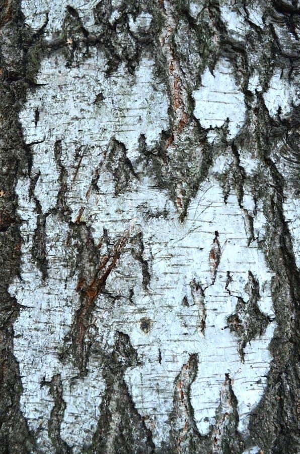 Bark texture. An Abstract Wood Bark Texture stock image