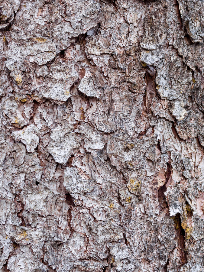 Download Bark Texture Royalty Free Stock Images - Image: 30590739