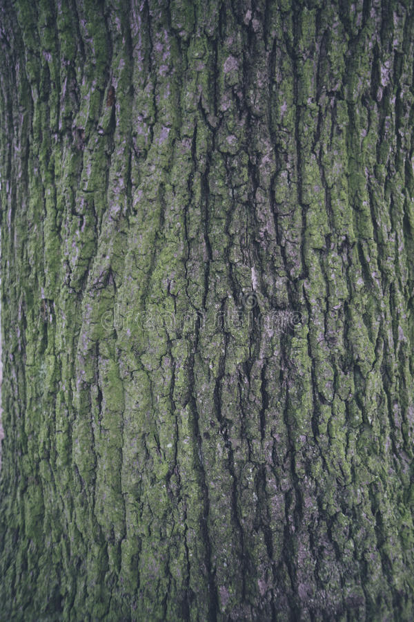 Bark texture 1. Texture of tree bark with rough texture. Ideal for backgrounds, textures, or compositing stock photography