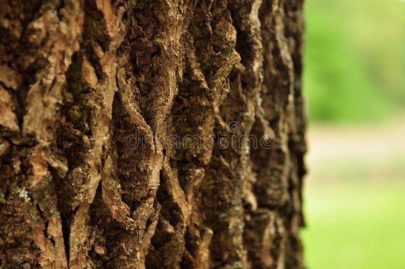 Bark of a tree royalty free stock photography