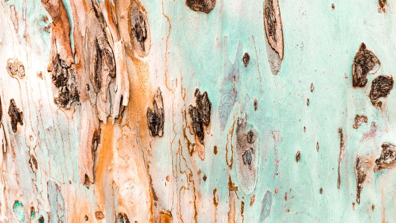 Bark of tree. Background. Wallpaper texture.Close up royalty free stock photography