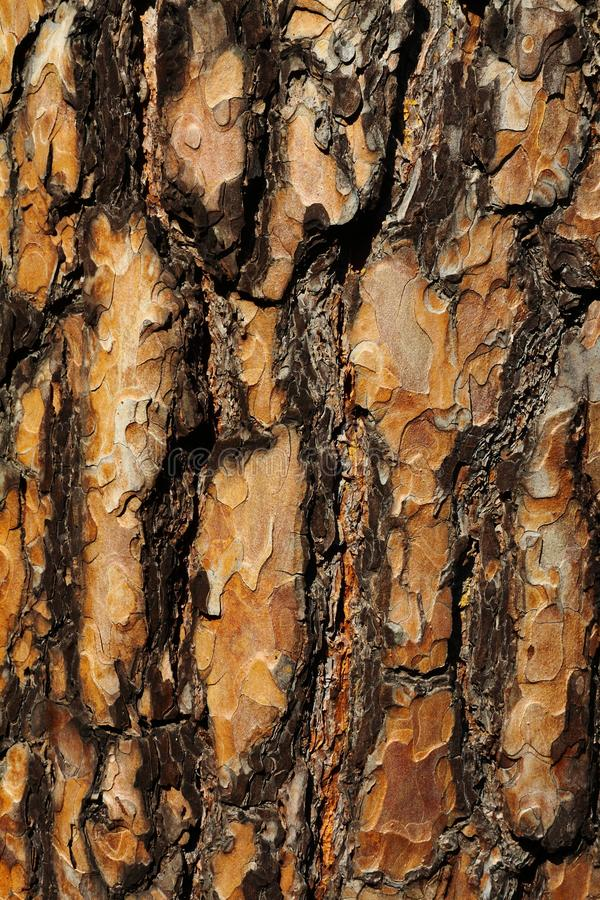 Bark of a tree. In the forest royalty free stock images