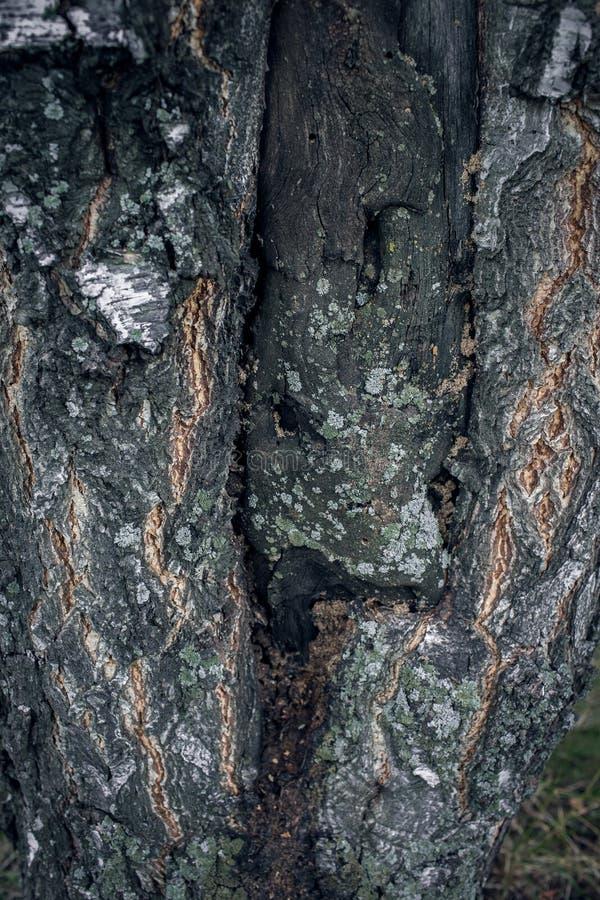 Bark of Tree stock photography