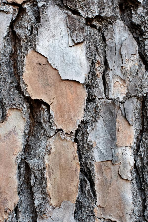 Layered Bark of a Pine Tree Background. ~BARK OF A TREE~ Layered, Cracked and Textured Bark of a Pine Tree Trunk stock photos