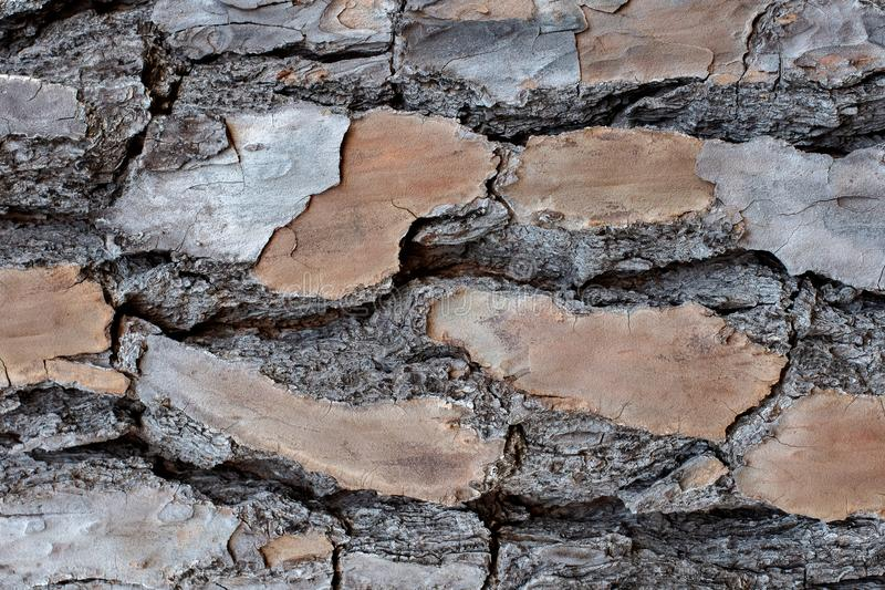 Layered Bark of a Pine Tree Background. ~BARK OF A TREE~ Layered and royalty free stock photography