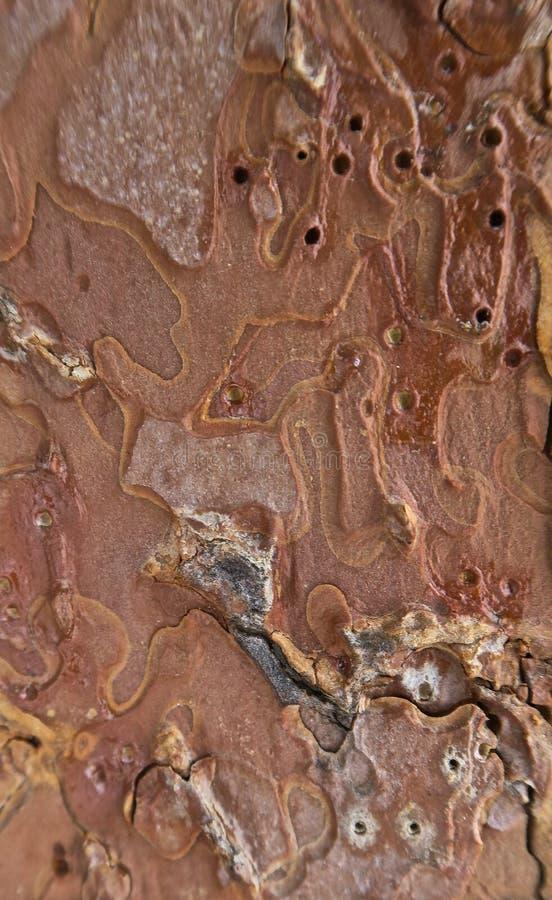 Bark of tree in macro royalty free stock photography