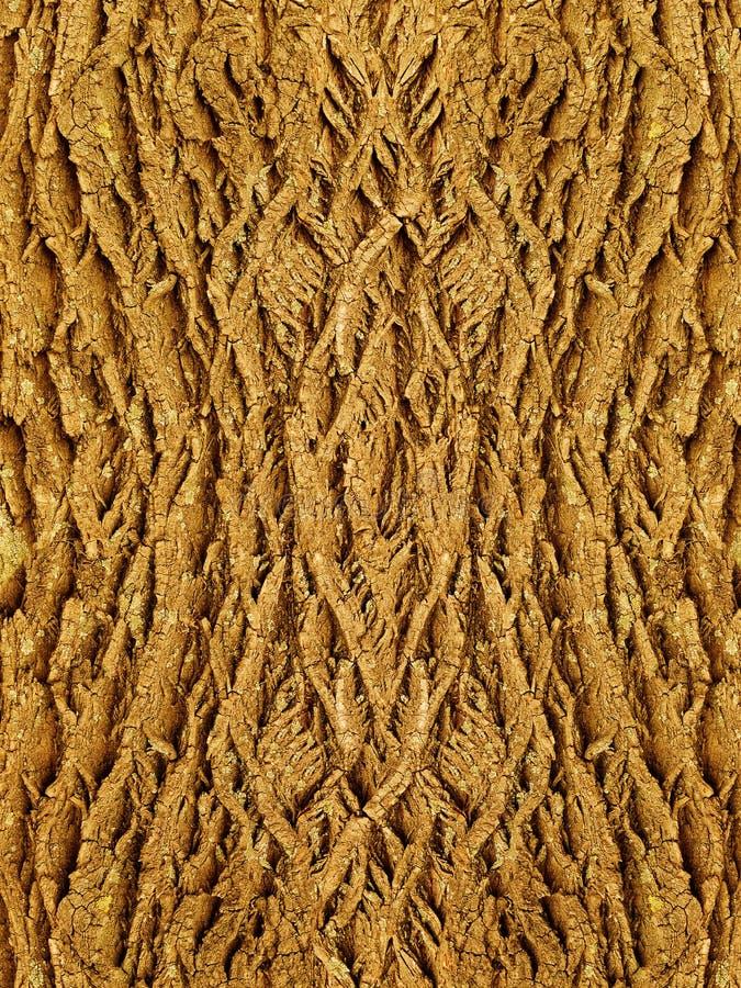 Bark of a tree an oak stock photo