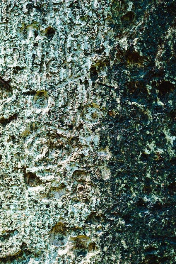 Bark tree old asia forest texture sri lanka royalty free stock photo