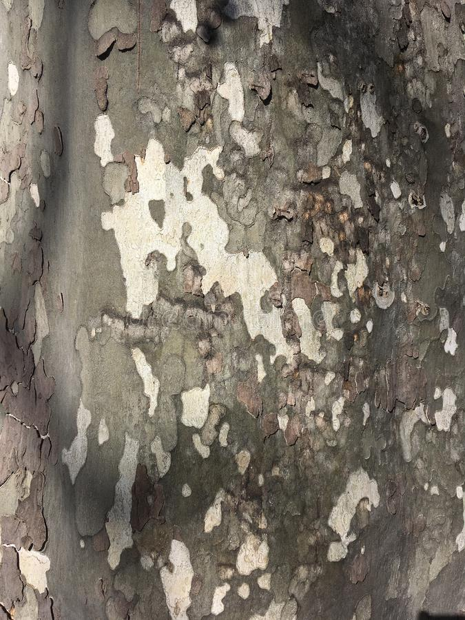 Bark of tree. Old tree detail texture as natural background stock image