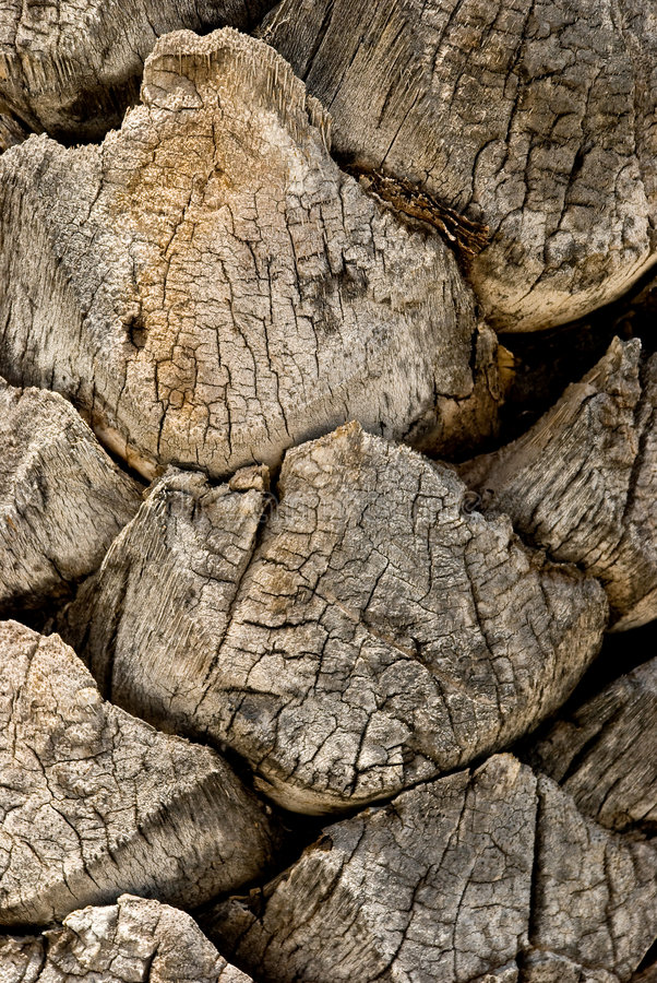 Bark Of A Tree-palm Bark Structure Royalty Free Stock Images