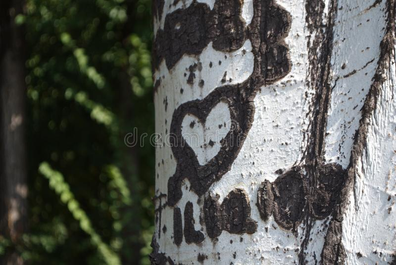 Bark of a tree poplar with pictures royalty free stock photography