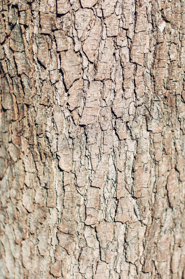 Bark Tree Rough Surface Texture stock photography