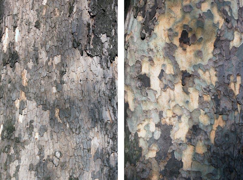 Bark tree royalty free stock photography