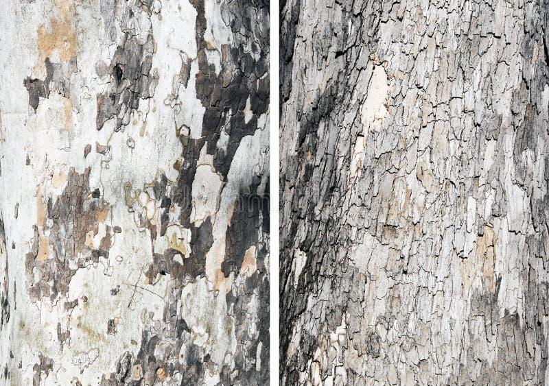 Bark tree royalty free stock images