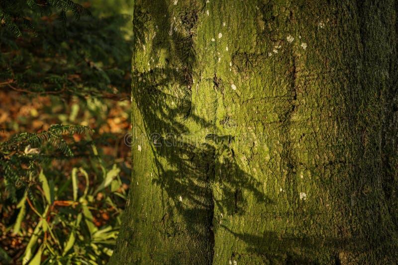 Bark on a tree on a sunny day stock photos
