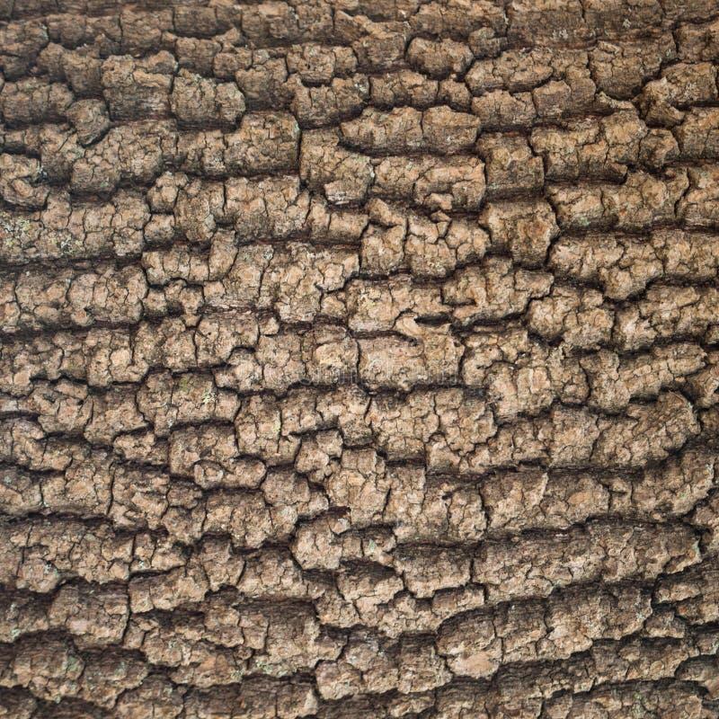 Free Bark Tree Texture Stock Photography - 82592122