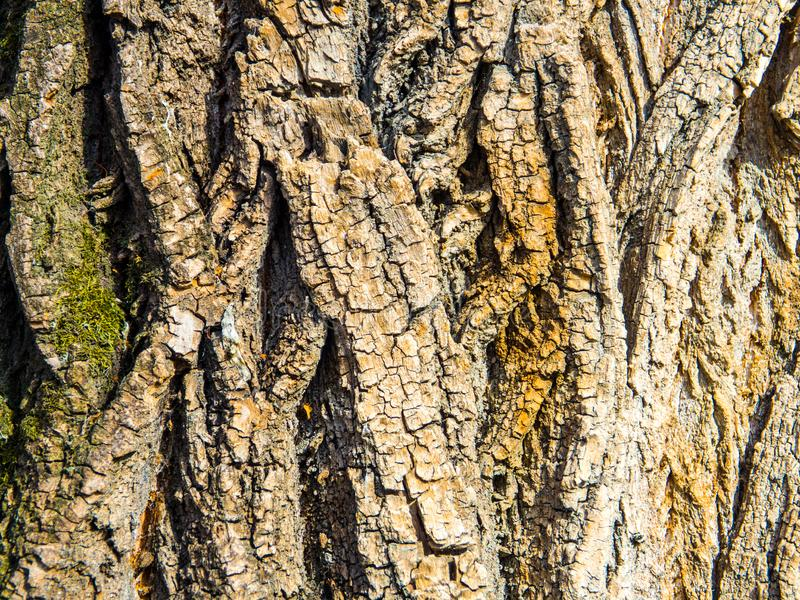 Bark of a tree texture background stock photo