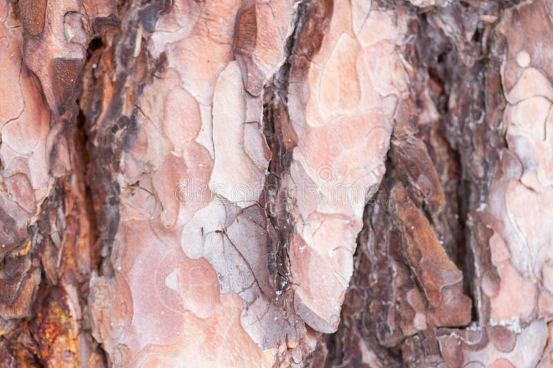 Bark Tree Texture royalty free stock images
