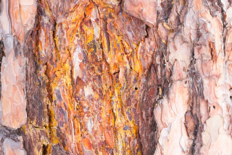 Bark Tree Texture stock images
