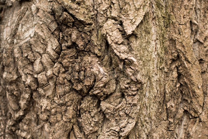 Bark Tree texture full frame in nature. Old brown background stock images