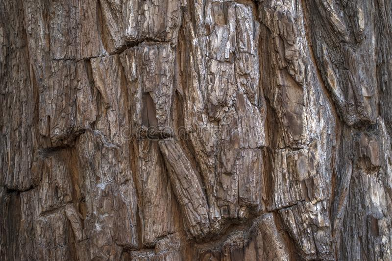 Bark of tree trunk. Tree trunk for background. Ideal wooden background image bark nature texture brown closeup natural textured old surface forest pattern stock images