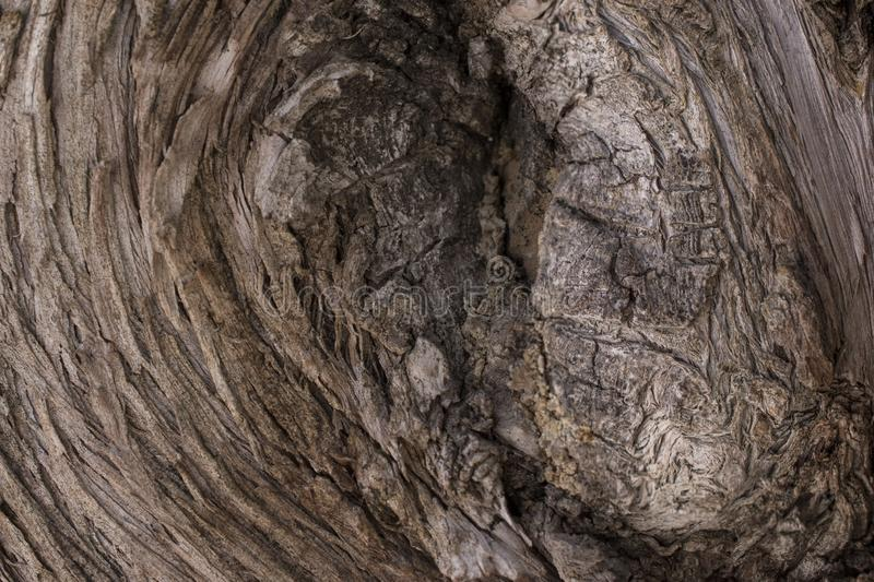 Bark of tree trunk. Tree trunk for background. Ideal wooden background image bark nature texture brown closeup natural textured old surface forest pattern stock photo