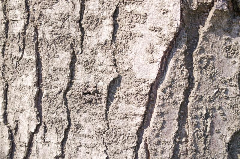 Bark. Tree. Wooden bark. Reliefs of the tree. Nature. Natural reliefs. Wood texture. Natural textures. Background. Wooden background. Vegetation. Plant royalty free stock photography