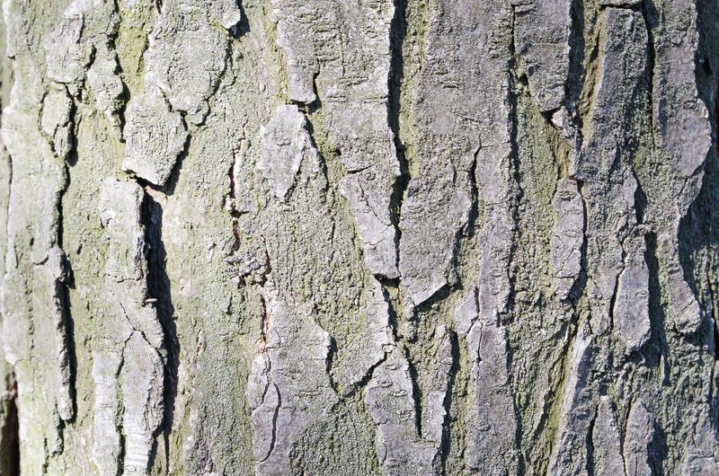 Bark. Tree. Wooden bark. Reliefs of the tree. Nature. Natural reliefs. Wood texture. Natural textures. Background. Wooden backgrou. Nd. Vegetation. Plant stock photography