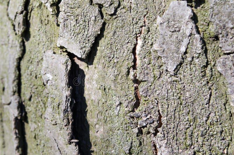Bark. Tree. Wooden bark. Reliefs of the tree. Nature. Natural reliefs. Wood texture. Natural textures. Background. Wooden backgrou. Nd. Vegetation. Plant stock image