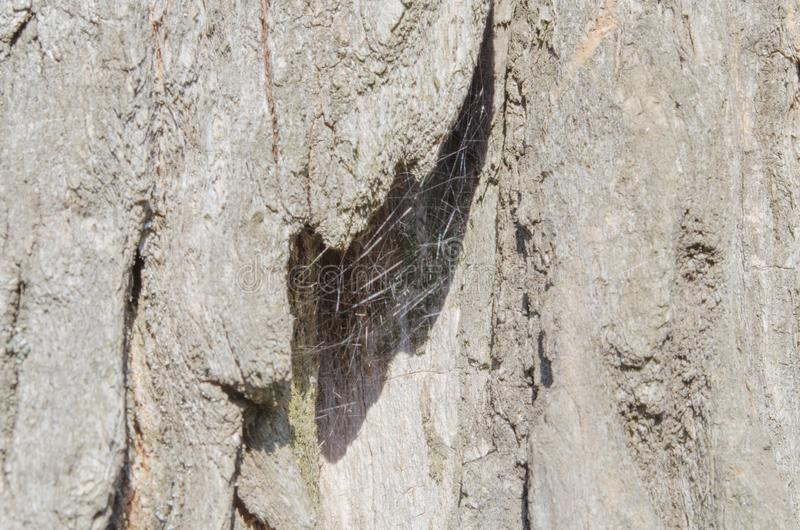 Tree. Wooden bark. Reliefs of the tree. Nature. Natural reliefs. Wood texture. Natural textures. Background. Wooden backgrou. Bark. Tree. Wooden bark. Reliefs of stock photos