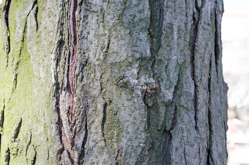 Green.Tree. Wooden bark. Reliefs of the tree. Nature. Natural reliefs. Wood texture. Natural textures. Background. Wooden backgrou. Bark. Tree. Wooden bark stock images