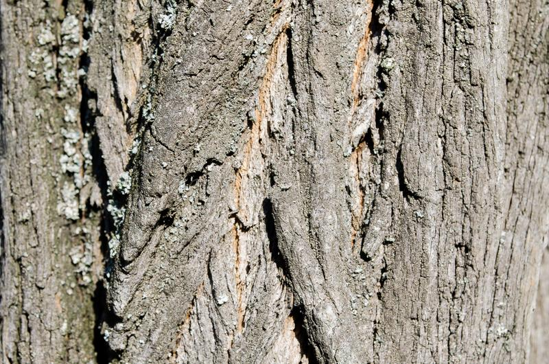 Tree. Wooden bark. Reliefs of the tree. Nature. Natural reliefs. Wood texture. Natural textures. Background. Wooden backgrou. Bark. Tree. Wooden bark. Reliefs of royalty free stock images