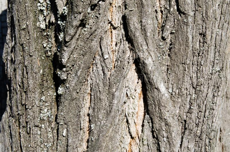 Tree. Wooden bark. Reliefs of the tree. Nature. Natural reliefs. Wood texture. Natural textures. Background. Bark. Tree. Wooden bark. Reliefs of the tree royalty free stock photo