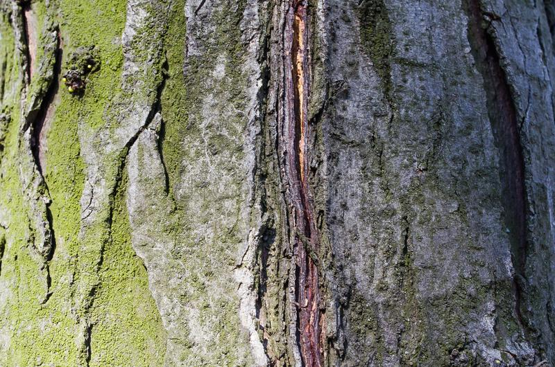 Moss. Tree. Wooden bark. Reliefs of the tree. Nature. Natural reliefs. Wood texture. Natural textures. Background. Wooden backgrou. Bark. Tree. Wooden bark royalty free stock photography