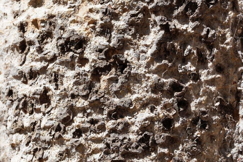 Bark of a wild ficus tree stock image