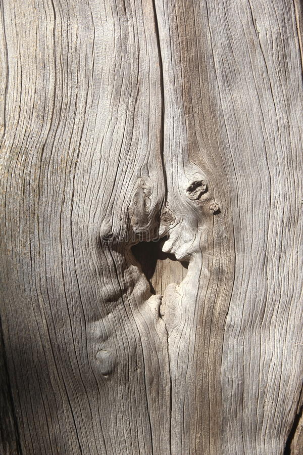 Bark Wood Texture. stock photos