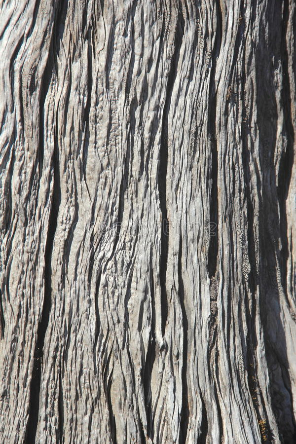 Bark Wood Texture. royalty free stock photo