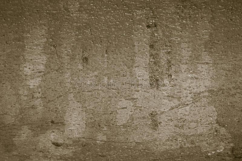 Bark wood stock image