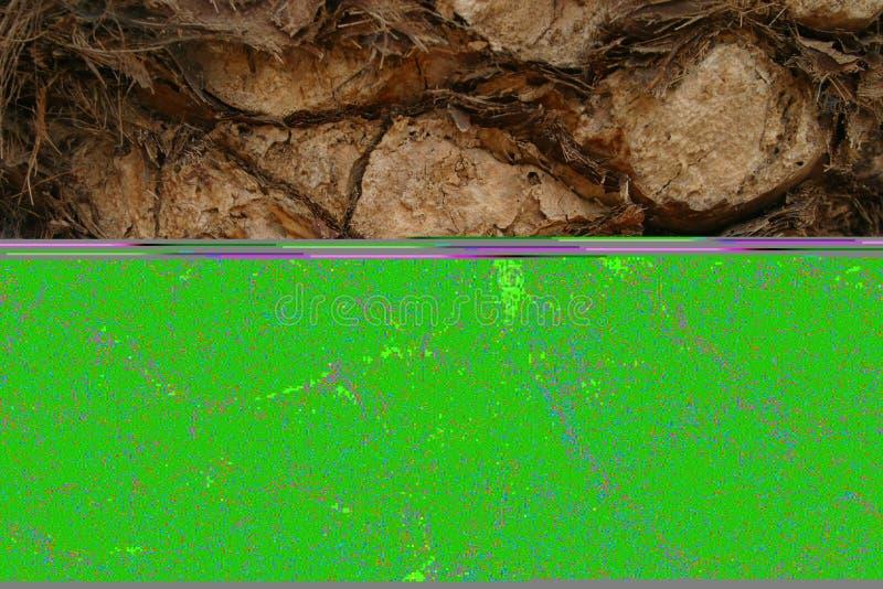 Download Bark2 palma zdjęcie stock. Obraz złożonej z naturalny, krakingowy - 48070
