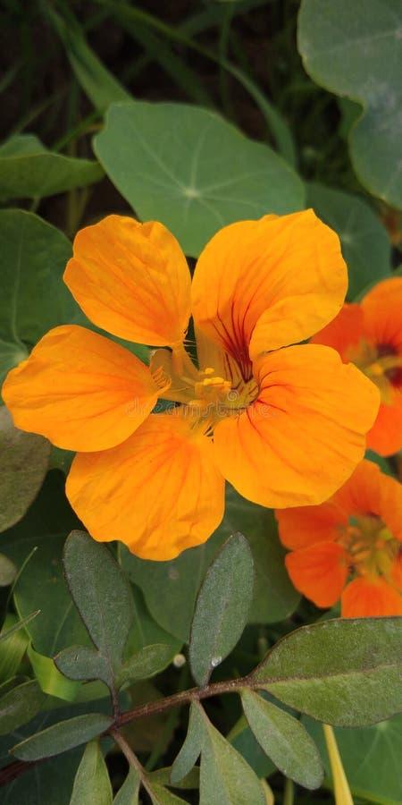 Barka kwiaty zdjęcie royalty free
