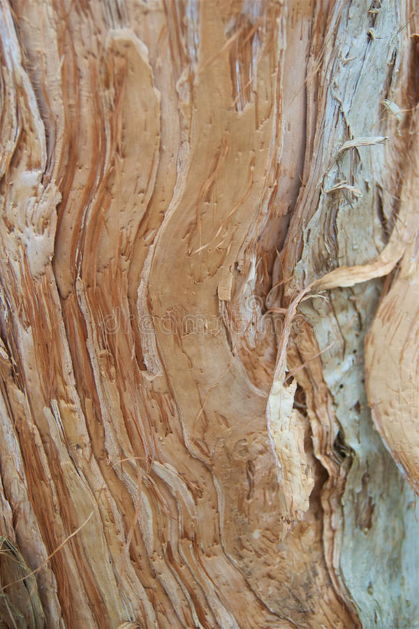 Barke australischen Papierbarkeneingeborener Baums stockfotografie